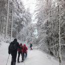 Nadaljnja pot skozi gozd