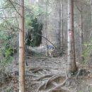 Pot na Tolsti vrh nad Celjsko kočo (vzhodna pot)