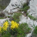 Cvetoče rožice :)