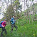 Pot skozi mlajši gozd