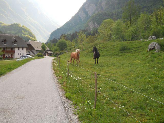 Tudi konja naju prideta pozdravit :)