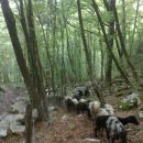 Tudi ovčke se gredo past :)