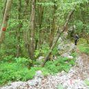 Spust skozi gozd