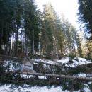 Podrtih dreves na poti je kar nekaj