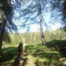 Pot od koče na Vrtaški planini