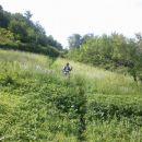 Pot čez travnik