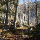 Gozdna pot s številnimi odcepi.