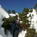 Snežni tunel med borovci :)
