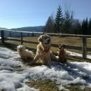 Še naš pozerski pasji trio :)