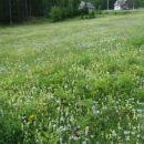Lepota trav.