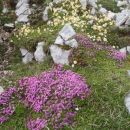 Cvetlični vrt.