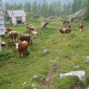 Po imenu planine bi sem bolj spadale Ovce.