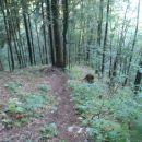 Gozdno vijuganje.