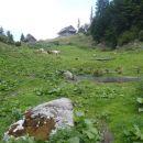 Mali vzpon do Orožnove koče na planini za Liscem 1338m.