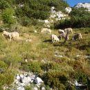Ja, to so pa ovčke.