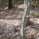 Lepo razporejena lesna goba po steblu navzgor.