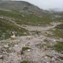 Ovčke, lepe bele, od dežja oprane.