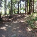 Še zadnji prehod skozi gozd.