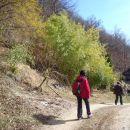 Bambus pod Gorjanci.