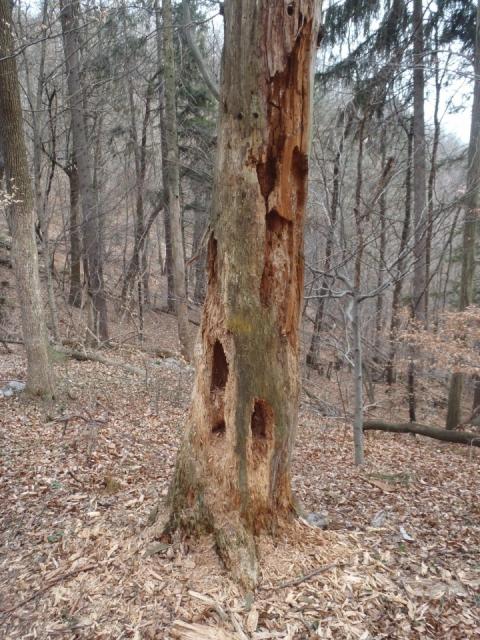 Niti za drva več ni.