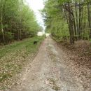 Skozi gozd in po cesti sledimo markacijam.