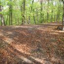 Ponovno diagonalno prečkaj gozdno cesto.