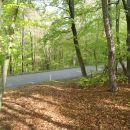Prečkaj cesto Moščanci - Križevci, sledi spust skozi gozd.