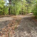 Ob prihodu v gozd se pot odcepi levo od kolovoza.