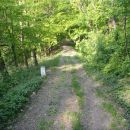 Po gozdni cesti.