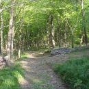 Zavij levo, prihod na gozdno učno pot.