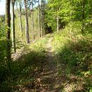 Lepo shojena gozdna pot.
