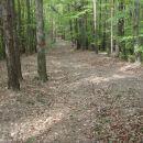 Slediš lepi grebenski markirani gozdni cesti.