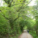 Zelo razvejano mogočno drevje, predvsem hrast.