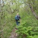 Ozke stezice skozi gozd.