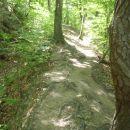 Gozdna pot.