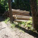 Lubadarjev les.