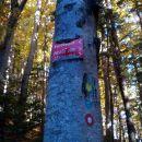 Kar precej se je napis spoprijateljil z drevesom.