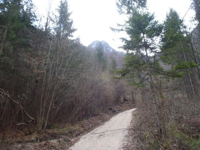 Cesta proti Gašperjevi koči.