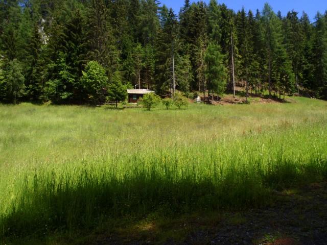 Gozdna jasa na poti proti Slemenu.