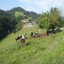Večji del po makedamskih cestah mimo pašnikov in kmetij.