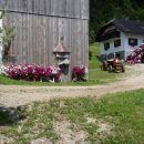 Ob poti, hiša v cvetju.