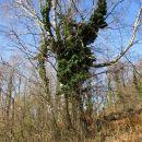 Zajedavci na brezi.