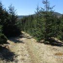 V smeri Podnanosa skozi bujno rastoč smrekov gozd.