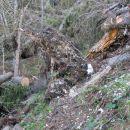 Urejeni  prehodi ob, prek in pod podrtimi drevesi.