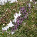 Naravne cvetlične grede.