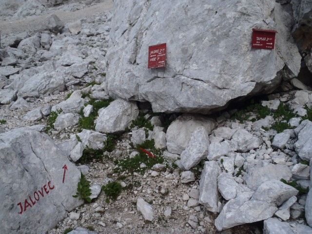 20190805 Jalovec - kralj SLO gora - foto