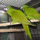 parrot forum ugani papagaja