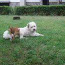 Spikey in Zoja