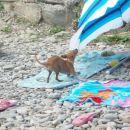 Ko pride ven iz vode pa se mu zmeša in začne laufat na okoli in med drugim grist marelo :)