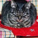 Borbeni mačak